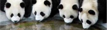[WoWPop] Pandas Malditos