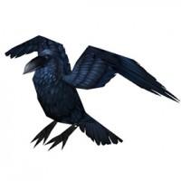 corvo gilneano