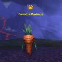 Carotus