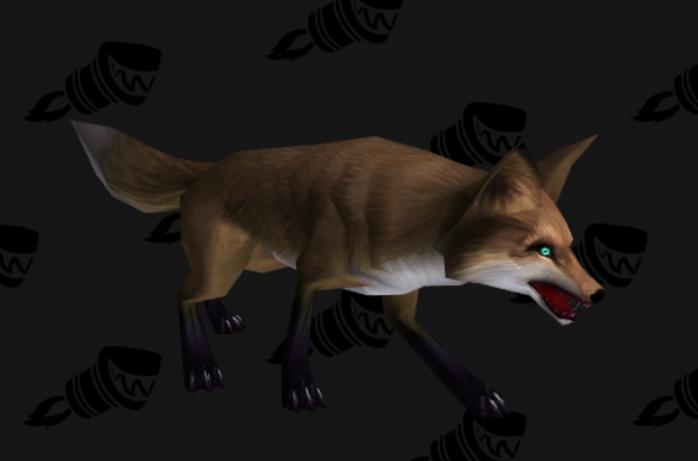 Black-footed Fox Kit